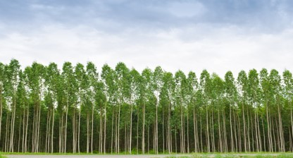 Papel E Sustentabilidade